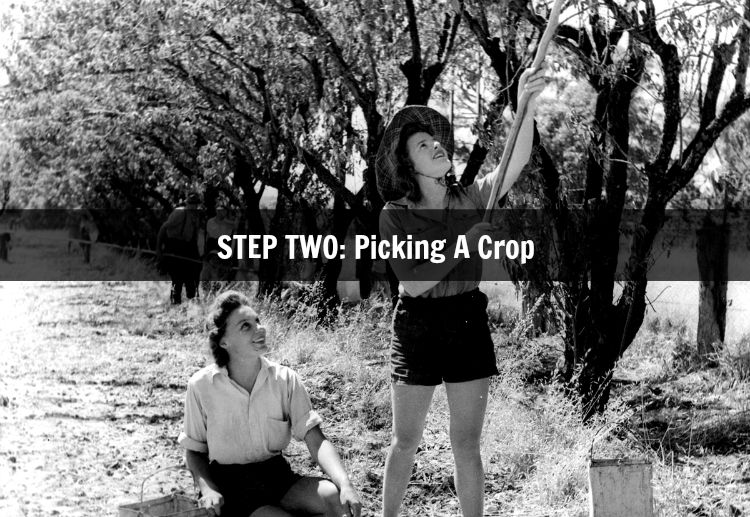 Step Two Picking A Crop